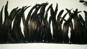קוק ארוך שחור