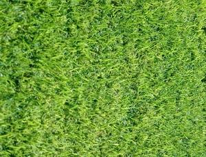 דשא אלטרו