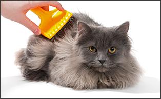טיפוח והדברה לחתול