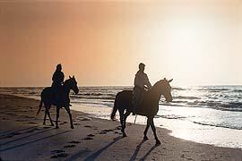 טיול סוסים פרטי לזוג –לשעה