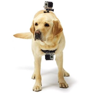 רתמה לחיות GoPro Fetch Dog Haress