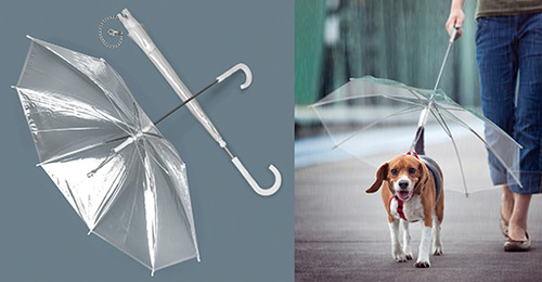 מטריה לכלב