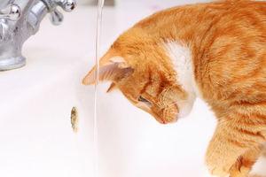 חשיבות שתיית מים לחיות מחמד:
