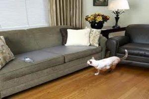 שטיחון אלקטרוני לאילוף כלבים וחתולים